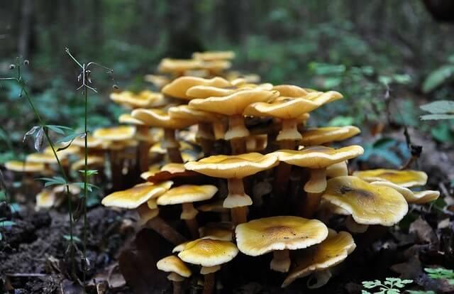 Grzyby w lesie
