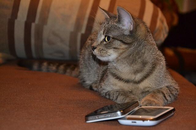 kot nie wie który telefon wybrać
