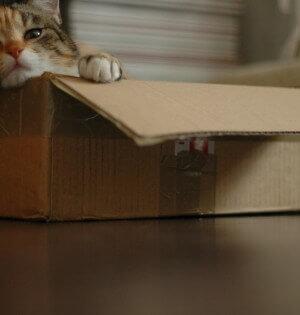Jaki wybrać żwirek dla kota