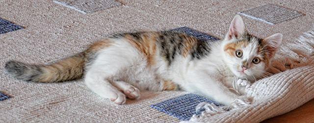 Zobacz, jak usunąć sierść z dywanu?