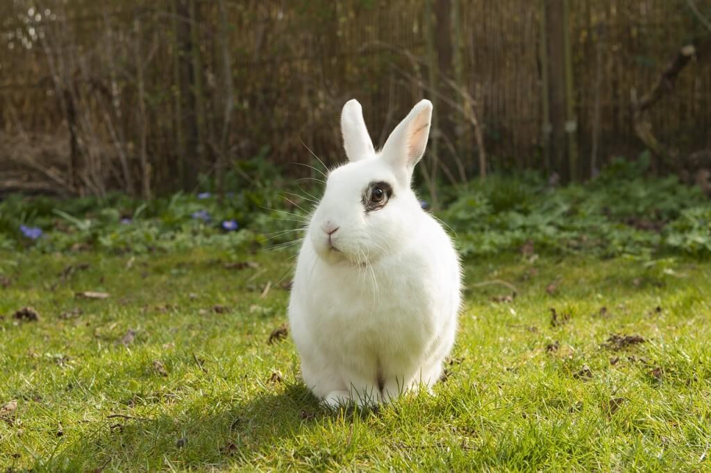 biały królik w ogrodzie
