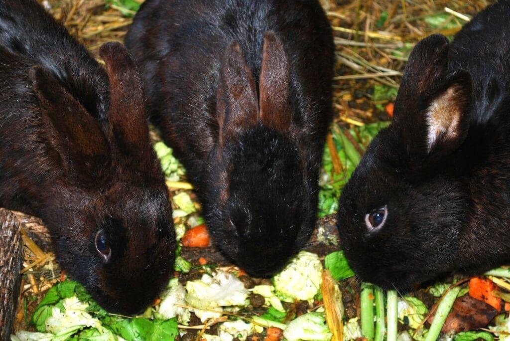 króliki jedzą owoce i warzywa