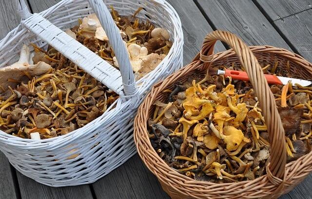 Kosze pełne grzybów